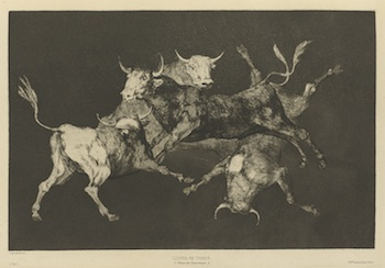 Etching of four bulls leaping and falling around each other.